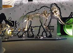 Prehistoric Fossil Animals