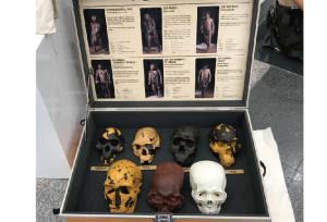 《Summer Program》 Humanity Seen Through the Skull